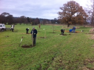 trees being planted by volunteers